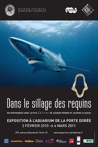 requin femelle nom